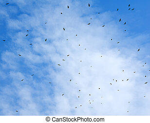 Birds flying in the sky.