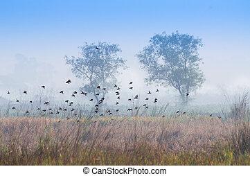 Birds flying in the winter mist