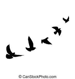 Birds flying line black background
