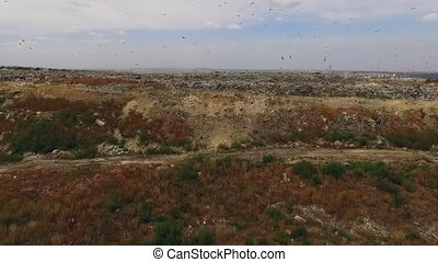 Birds Flying Over Big City Waste Dump In Ukraine