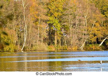 Birds flying over lake nature scene