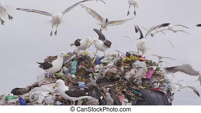 Flock of birds flying over rubbish piled on a landfill full of trash with stormy overcast sky in the background in slow motion