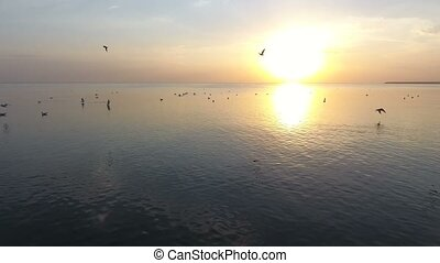 Birds flying over the sea surface at a splendid sunset in...