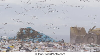 Flock of birds flying over vehicle working and clearing rubbish piled on a landfill full of trash with cloudy overcast sky in the background in slow motion