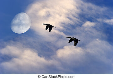 Birds Flying Silhouette Moon