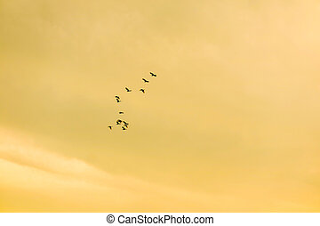 birds flying to home on sunset sky soft cloud