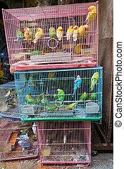 Birds for sale in bird market hong kong