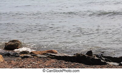 Birds fuss on the seacoast