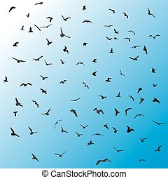 Birds, gulls, black silhouette on blue background. Vector