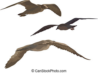 Birds gulls set