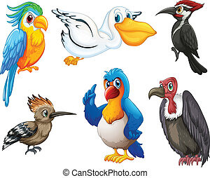 Birds - Illustration of different kind of birds