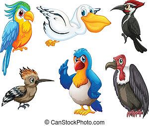 Birds - Illustration of different kind of birds