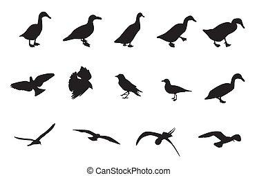 birds., illustration, silhuetter, vektor, sort, adskillige, hvid