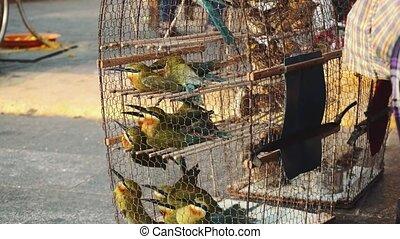 Birds in a Cage Cambodia, Phnom Penh.