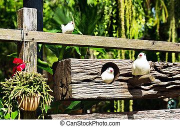 Birds in a village