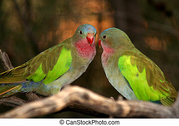Birds in Australia 1