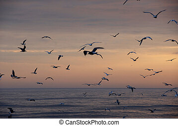 birds in flight - Birds in flight over baltic sea