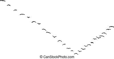 birds in flight in nature