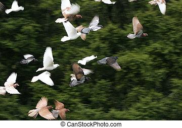 Birds in flight - Large group of birds in flight, some...
