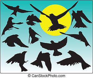 Birds in flight with sun and sky