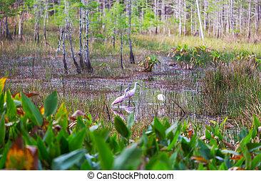 Birds in Florida
