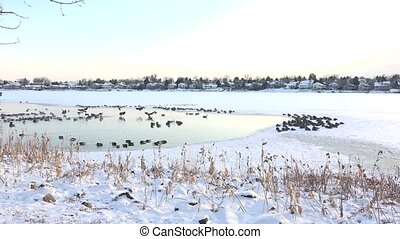 Birds In Frozen Hot Spring - A scenic view of birds in...