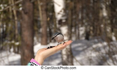Birds in hand eat seeds - Titmouse birds in woman's hand...