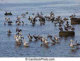 Birds in Mexico