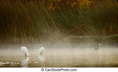 Birds in Misty Pond - egrets and heron standing in a misty ...