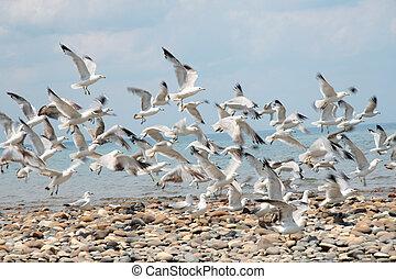 Birds in Motion - Seagulls taking flight from a rocky beach.