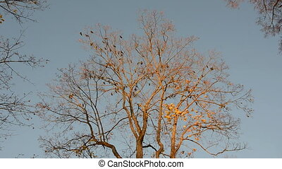 birds in the autumn tree