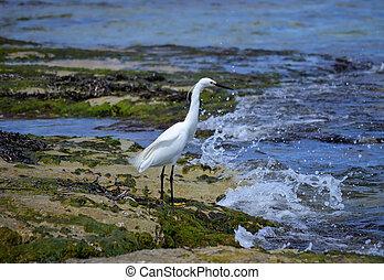 Birds in the beach of Playa De Mallorca, Spain