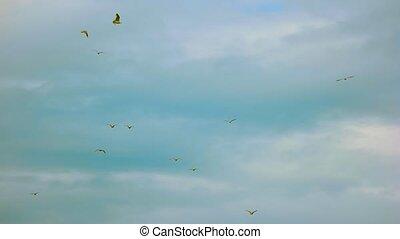 Birds in the sky.