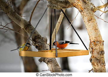 Birds in the winter on a wooden feeder