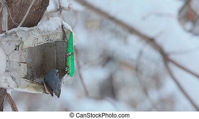 Birds in the winter park
