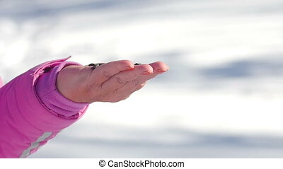 Birds in women's hand eat seeds - Nuthatch and titmouse...
