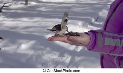 Birds in women's hand eat seeds - Titmouse and nuthatch in...