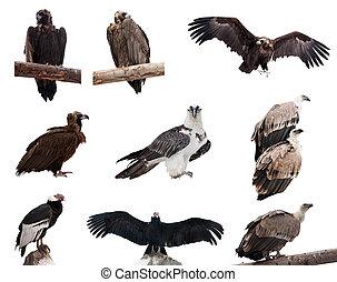 birds., komplet, na, szakal, odizolowany, biały