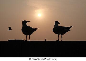 birds look