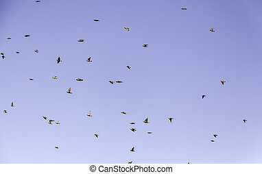 Birds migrating sky