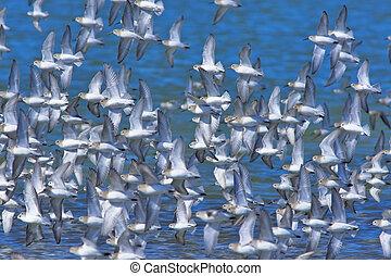 Birds migrations