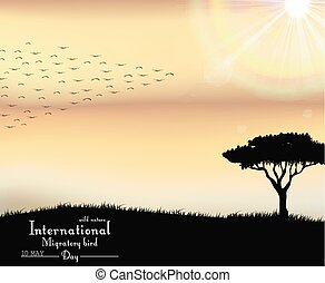 Birds migratory day on sunset