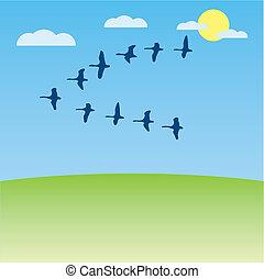 Birds migratory vector illustration