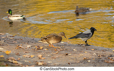 birds near the shore of a pond