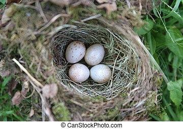 Birds Nest - A birds nest with 4 eggs
