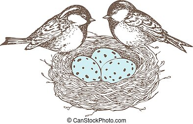 Birds, nest, eggs, drawn  in pen and ink style