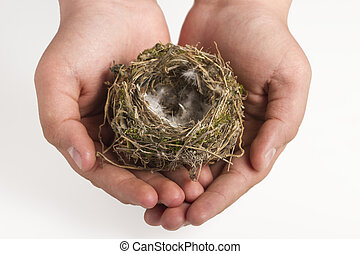 Bird's nest in the hands of a child