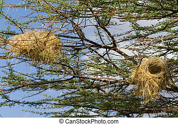 Bird's Nest on a Tree
