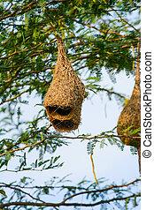 Birds Nest on the Tree