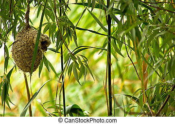 the unusual bird nest Remez pendulinus, hanging on a thin branch of willow